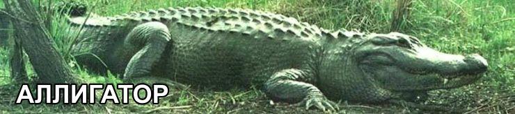 Индикатор - Аллигатор