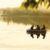Стратегия торговли на Форекс — «Трое в лодке» с использованием RSI, Stochastic, Williams %R